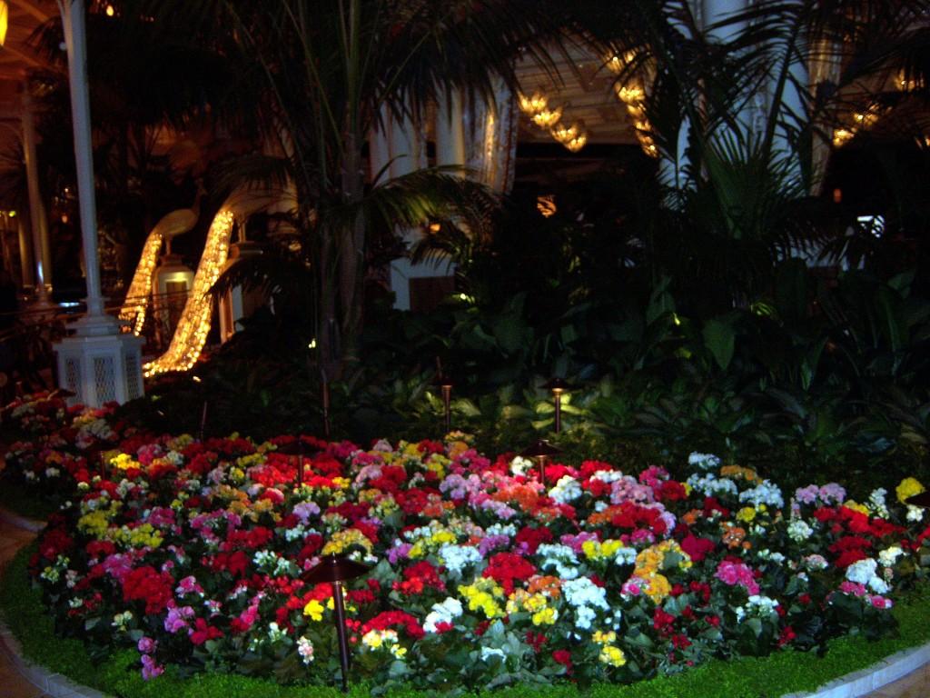 encore flowers