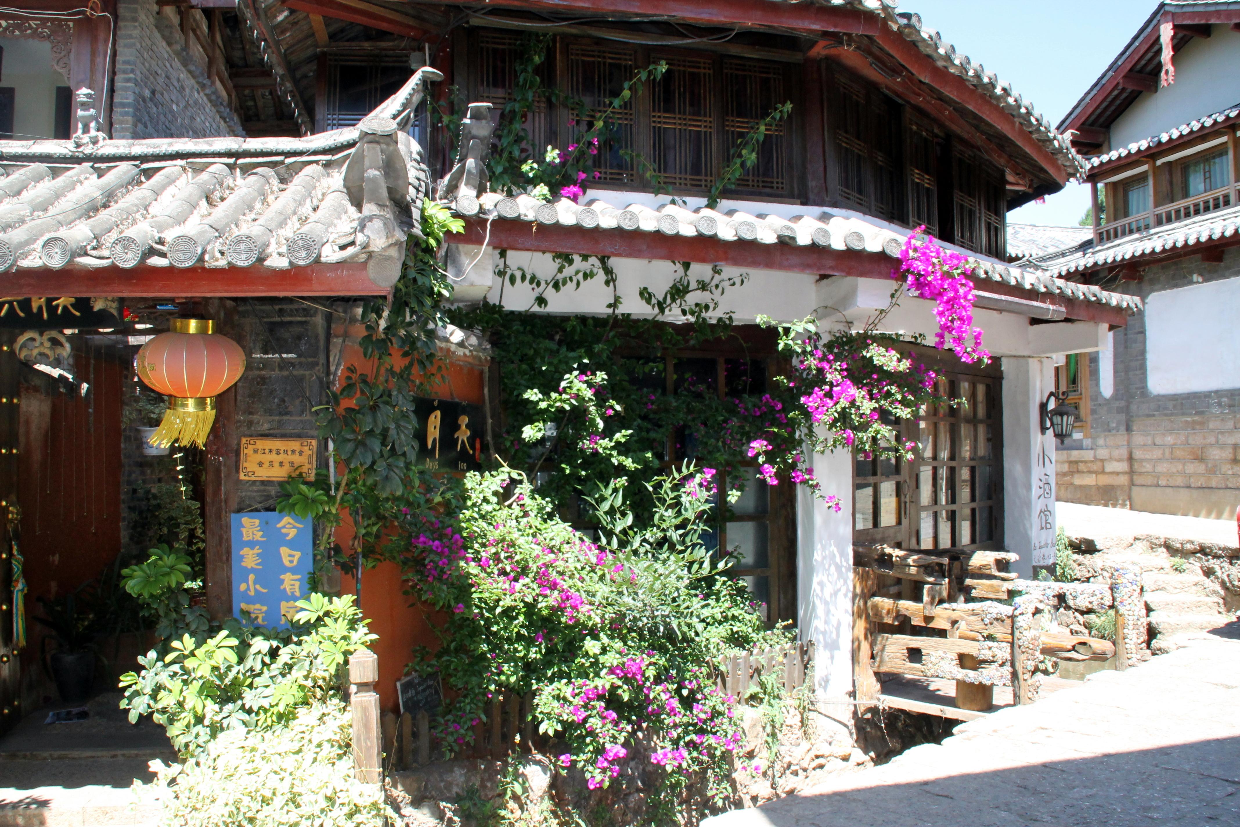 Lijiang China pretty flowers