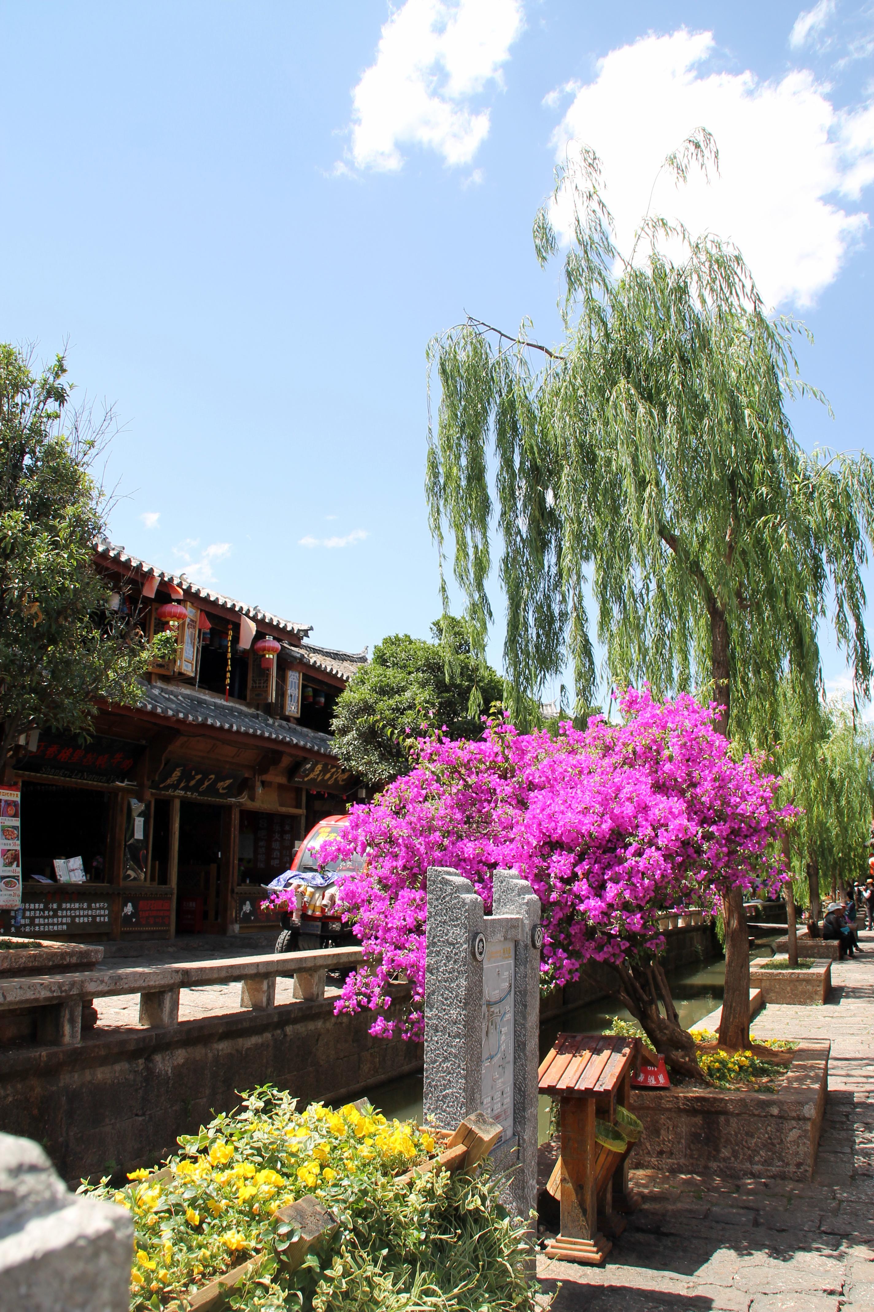 lijiang flowers china