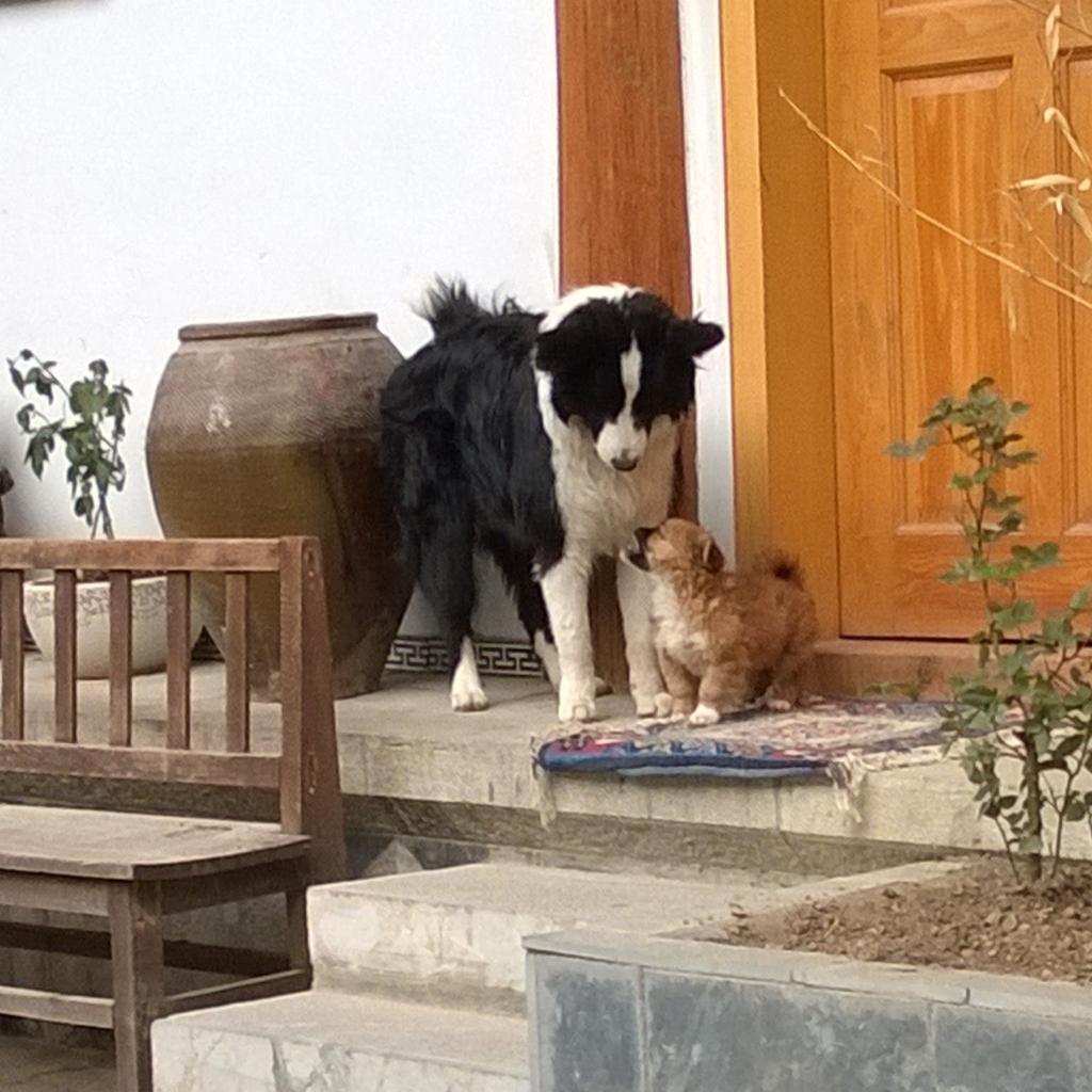 ns kitchen hostel dogs